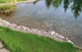 Как оборудовать пруд для запуска рыбы