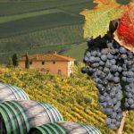 Лучшие виноградники Тосканы